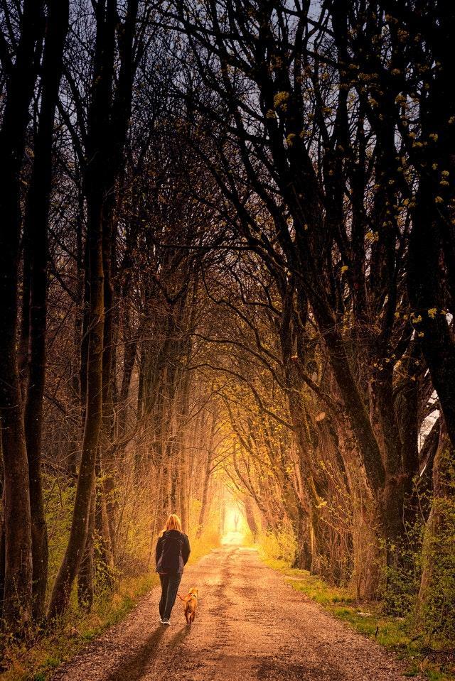 Långpromenad i skogen